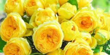 промокод цветы